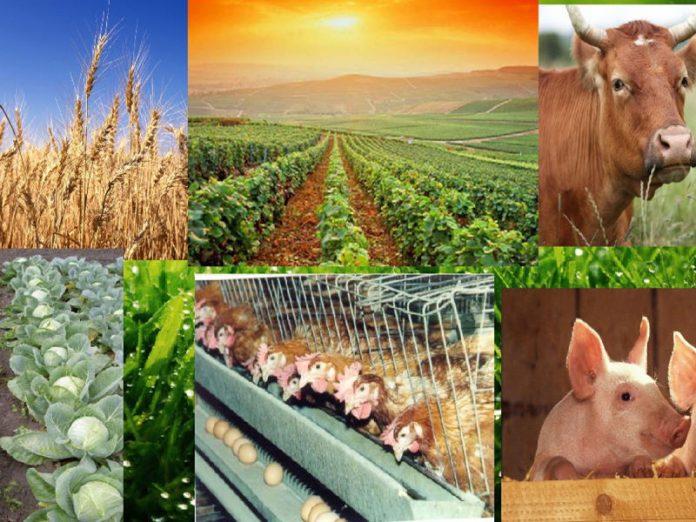 За 30 лет в сельхозпроизводстве России произошло значительное отставание темпов развития