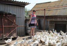 Малоимущие семьи Курганской области могут получить 100 тысяч рублей на развитие личного подсобного хозяйства