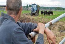 В Смоленской области сократился выпуск сельскохозяйственной продукции