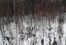 Тверской землевладелец забросил свои сотни гектаров