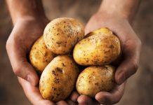 Почему дорожает картошка?