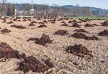 Влияние компоста на урожай в засушливых регионах