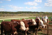 В Удмуртии фермерское хозяйство получило грант после вмешательства прокуратуры