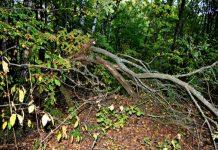 Камчатский фермер понесет наказание за заброшенный участок