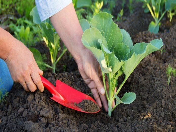 Татарстанцы безвозмездно получат от государства рассаду и семена овощных культур