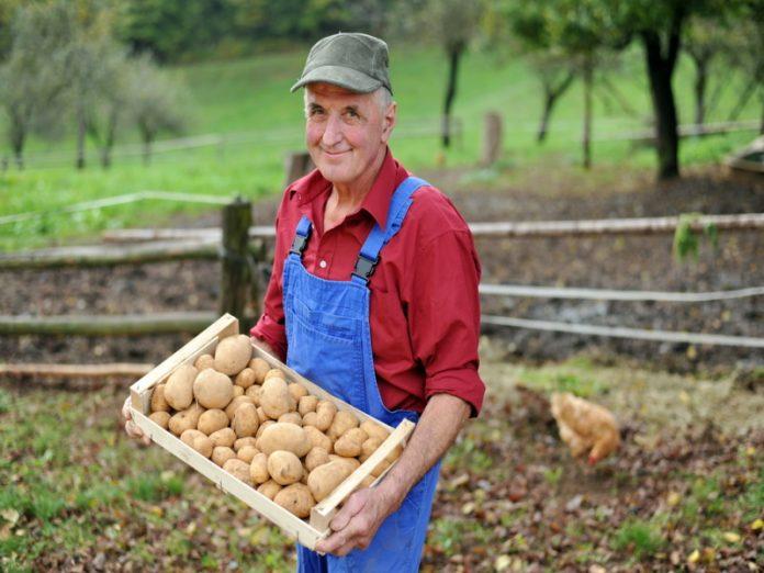 Фермеры Германии бесплатно раздали выращенный на своих угодьях органический картофель