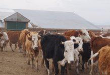 В Хакасии массово закрываются фермерские хозяйства