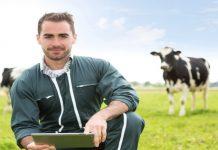 Господдержка фермеров: как получить заветную помощь