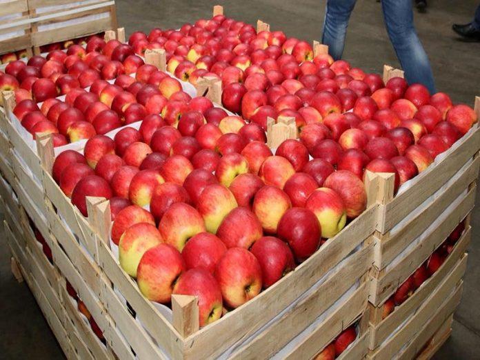 Российский рынок для молдавских яблок стал недоступен