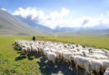 На Алтае уменьшилось поголовье сельскохозяйственных животных