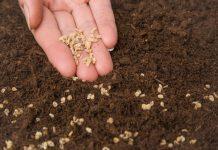 Семена могут получить «именное» удостоверение качества