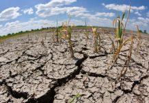 Из-за изменений климата в России может сократиться производство сельхозпродукции