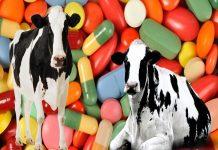 Китай ужесточает меры за применение стимуляторов роста в животноводстве