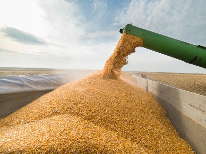 Крупные экспортеры приостановили закупки российской пшеницы