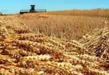 В 2020 году Россия собрала рекордный урожай зерна — Патрушев