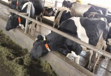 Фермеры Кузбасса лишились двух сельскохозяйственных субсидий