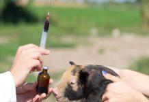 В России возможен дефицит импортных ветеринарных лекарств