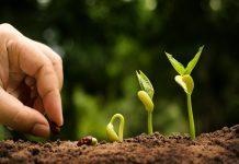 Семеноводство в России нуждается в возрождении