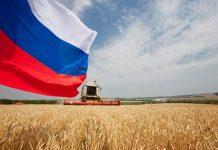Цены на российскую пшеницу упали на $14 до $238 за тонну из-за низкого спроса