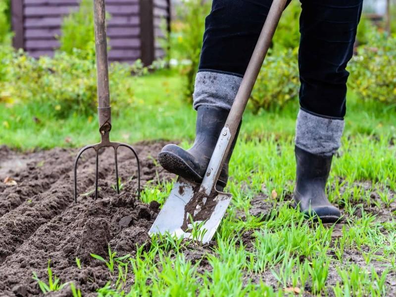 Костромичи могут безвозмездно получить земельные участки под огороды