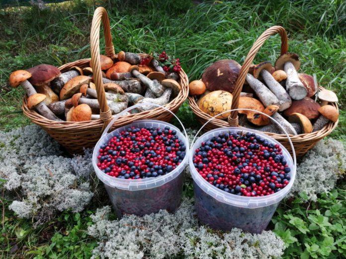 Ягоды и грибы в законе