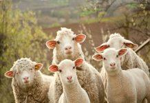 В Зауралье фермер скрыл массовую гибель скота