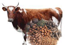 Производители кормов вынуждены изменить технологию производства