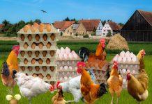 Национальный союз птицеводов призывает усилить контроль условий содержания птицы в частных хозяйствах