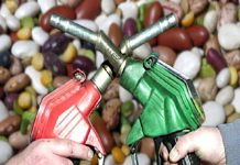 Рост цен на продукты связан с повышенным спросом на биотопливо — аналитики