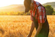 Дотянуться до поддержки. Как аграрии выживают в современных условиях?