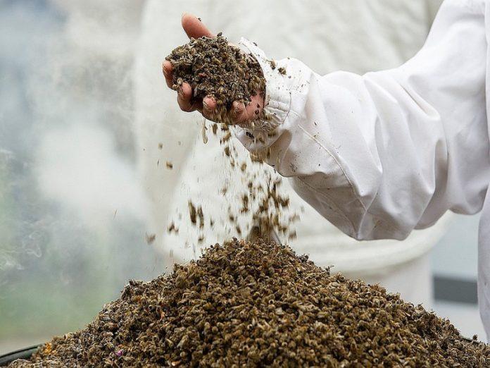 Ставропольские пчелы погибли от пестицидов