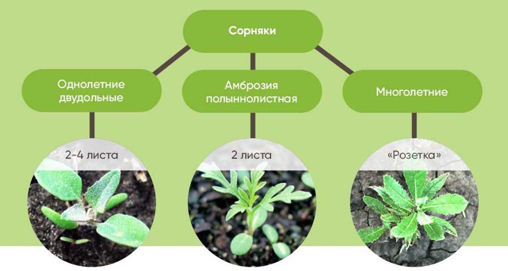 Бизон Эдванс — новый гербицид для защиты сои