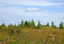 В России началась масштабная инвентаризация земель