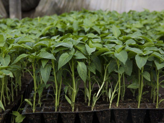 Как продавать рассаду и семена с приусадебного участка без уплаты налога