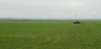 Льготную аренду сельскохозяйственных угодий вместо своих производителей получили иностранцы