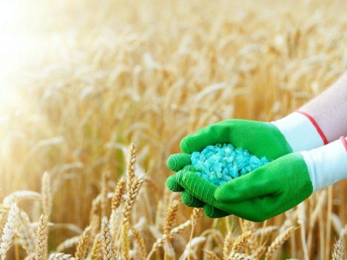 Из-за подорожавших удобрений может снизиться урожай зерновых