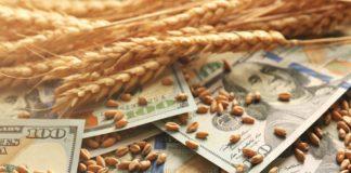 Закупочные цены на российскую пшеницу начинают расти