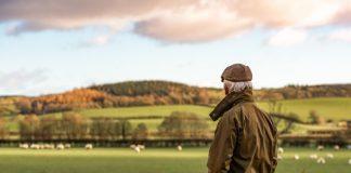 Британские власти выплатят пожилым фермерам компенсацию за уход на пенсию