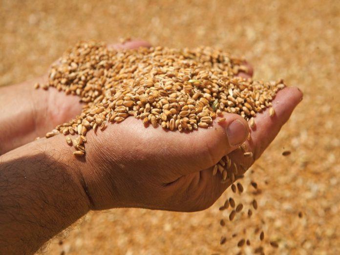 Запасы зерна в России предлагают увеличить до 3 млн тонн