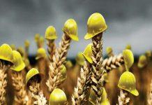 В России впервые создали цифровую платформу рисков сельского хозяйства