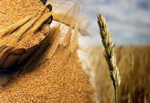 """Глава аналитического центра """"Совэкон"""" Андрей Сизов считает, что отечественный зерновой рынок ждут серьезные проблемы уже этой осенью."""
