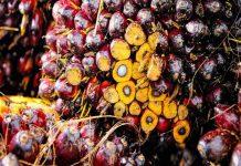 В России растет импорт пальмового масла