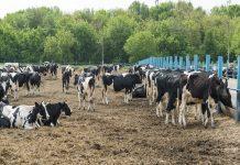 В Свердловской области сократилось количество фермерских хозяйств