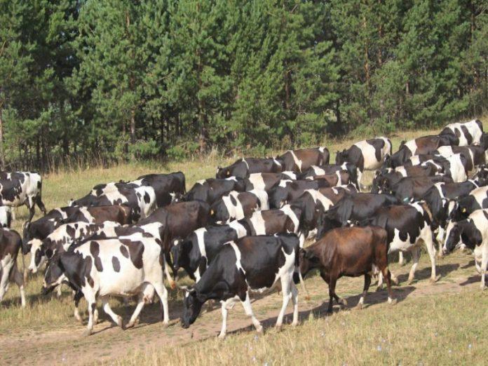 В Башкирии сократят субсидирование сельхозпроизводства
