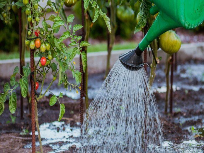 Ученые России и Чехии создали уникальный гель для сельского хозяйства