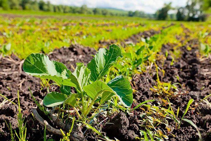 Словарь по земледелию
