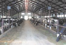 Молочное производство в Кировской области нуждается в решении проблем