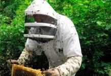 Пчеловоды Башкирии создали петицию о запрете пестицидов высокого класса опасности