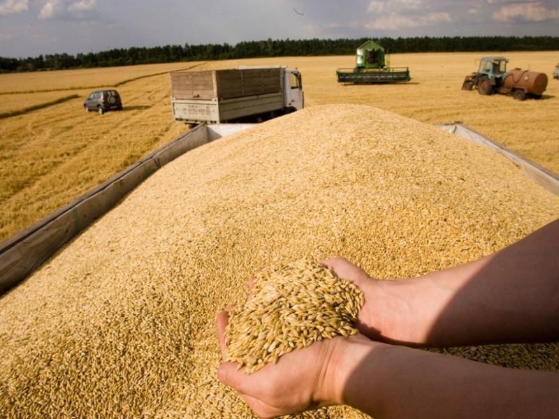 «Ручное» регулирование зернового рынка приведет к снижению конкурентоспособности