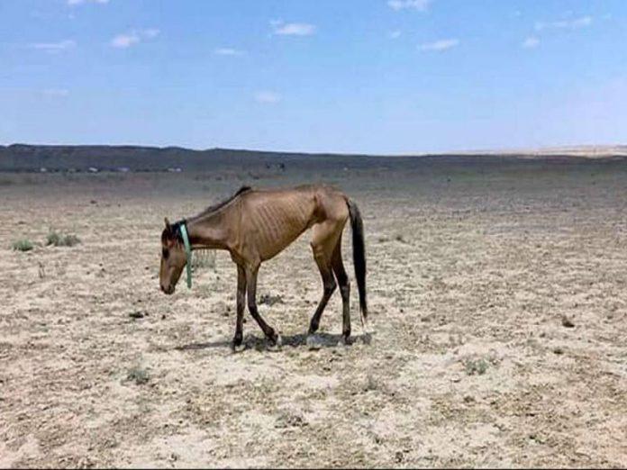 В Казахстане засуха привела к массовой гибели лошадей